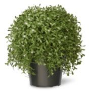 "National Tree Company 18"" Artificial Argentea Plant"