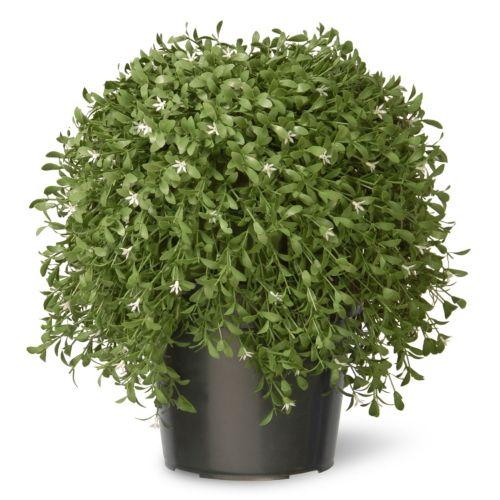 National Tree Company 18 Artificial Argentea Plant