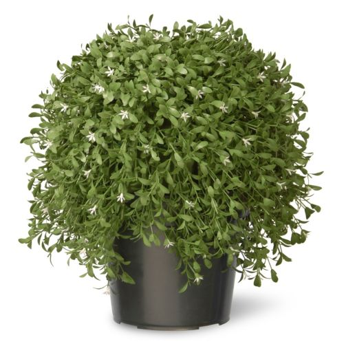 National Tree Company 18″ Artificial Argentea Plant