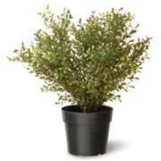 National Tree Company 24' Artificial Argentea Plant