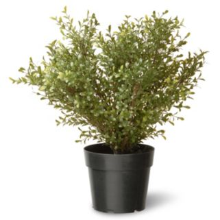 "National Tree Company 24"" Artificial Argentea Plant"