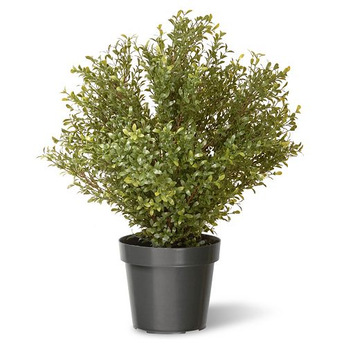 "National Tree Company 30"" Artificial Argentea Plant"