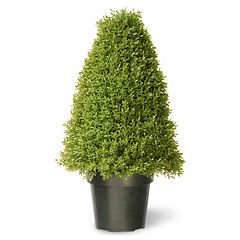 National Tree Company 30' Artificial Boxwood Tree
