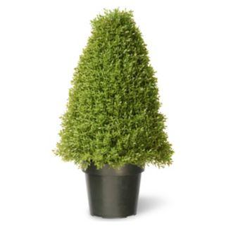 """National Tree Company 30"""" Artificial Boxwood Tree"""