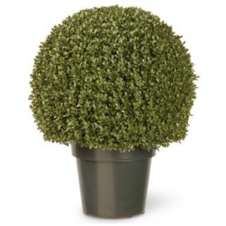"National Tree Company 22"" Artificial Mini Boxwood Ball Plant"