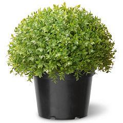 National Tree Company 15' Artificial Globe Japanese Holly Plant