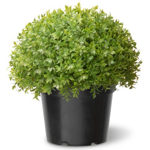 "National Tree Company 15"" Artificial Globe Japanese Holly Plant"