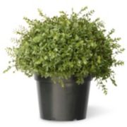 "National Tree Company 15"" Artificial Mini Tea Leaf Bush"