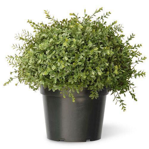 "National Tree Company 15"" Artificial Mini Tea Leaf Bush"