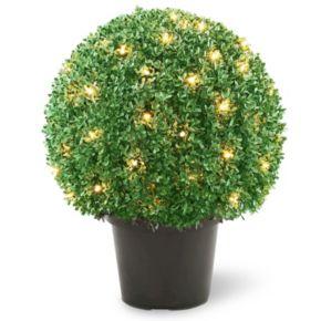 "National Tree Company Pre-Lit 22"" Mini Boxwood Ball Artificial Plant"