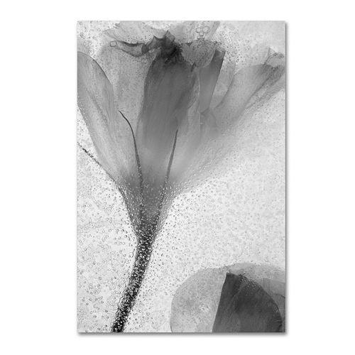 Trademark Fine Art Flowers on Ice-13 Canvas Wall Art