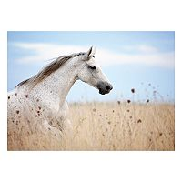 Field of Beauty Horse Canvas Wall Art