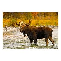 Reflective Art Aqua Moose Canvas Wall Art