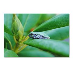 Trademark Fine Art Balance Canvas Wall Art