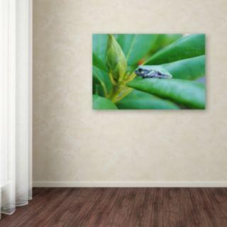 Trademark Fine Art Balance Canvas Wall Art