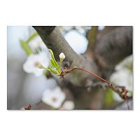 Trademark Fine Art Before Bloom Canvas Wall Art