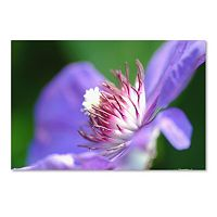 Trademark Fine Art Clarity Canvas Wall Art