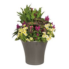 Suncast Tisa 16 in Planter 2 pc Set