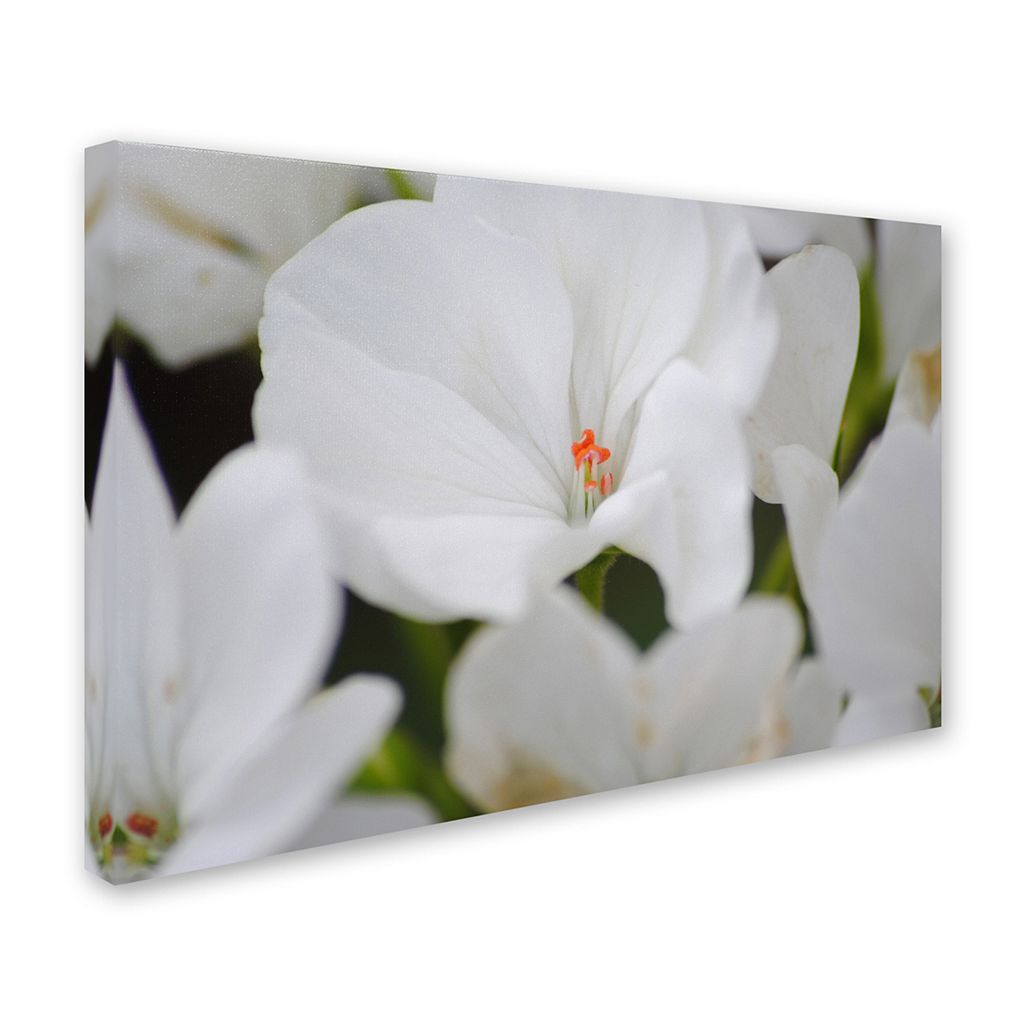Trademark Fine Art Clustered Canvas Wall Art