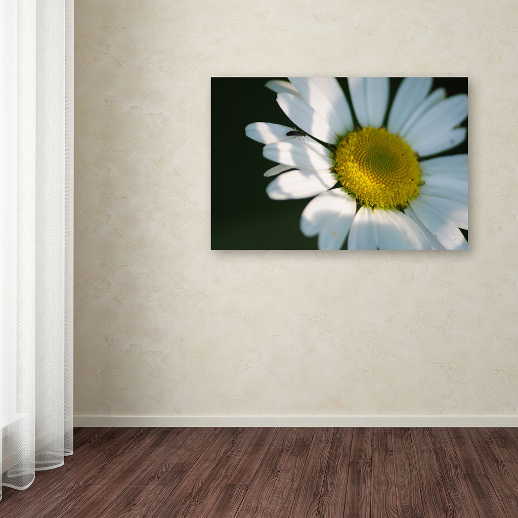 Trademark Fine Art Hidden in Shadows Canvas Wall Art