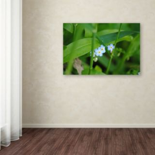Trademark Fine Art Limited Perfection Canvas Wall Art
