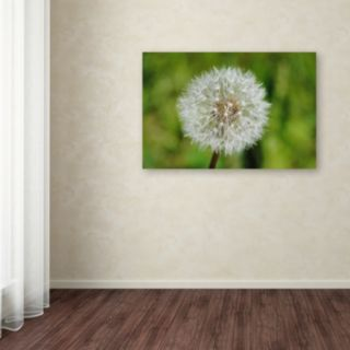 Trademark Fine Art Make a Wish Canvas Wall Art