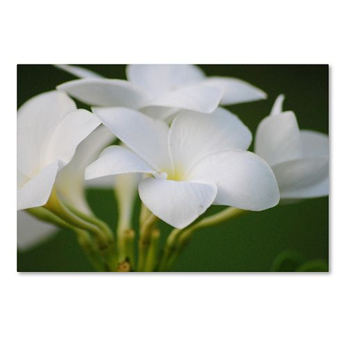 Trademark Fine Art Picture Perfect Canvas Wall Art