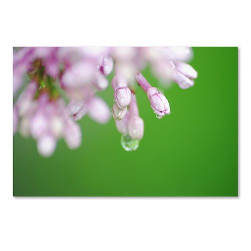 Trademark Fine Art Pure Canvas Wall Art