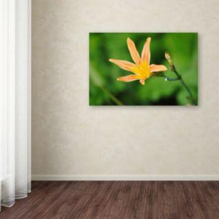 Trademark Fine Art Sweet Spice Canvas Wall Art