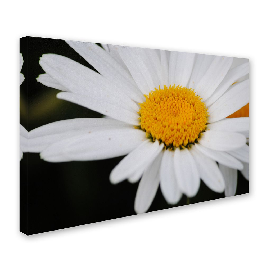 Trademark Fine Art Sweet Splendor Canvas Wall Art