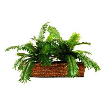 Designs by Lauren Artificial Palm Plant