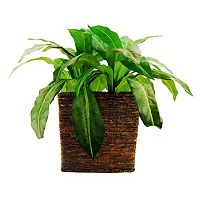 Designs by Lauren Artificial Birdsnest Fern Plant