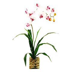 Designs by Lauren Artificial Phalaenopsis Orchid & Glass Vase