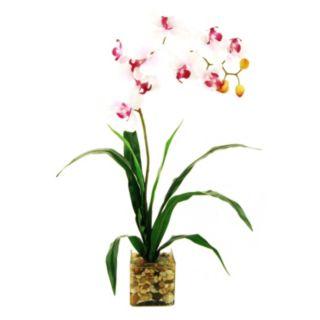 Designs by Lauren Artificial Phalaenopsis Orchid & Glass Vase