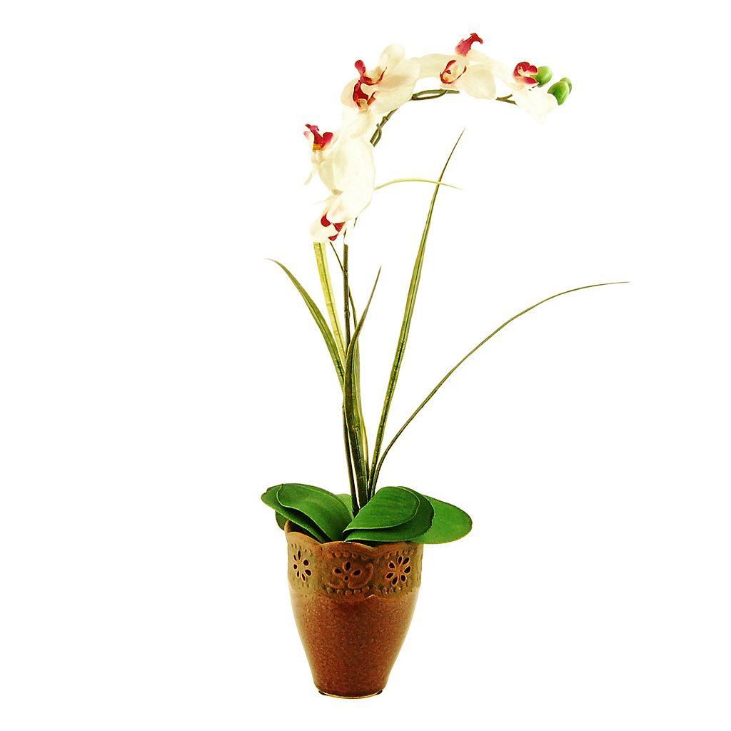 Designs by Lauren Artificial Phalaenopsis Orchid & Grass Arrangement