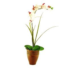 Designs by Lauren Artificial Phalaenopsis Orchid & Grass Arrangement