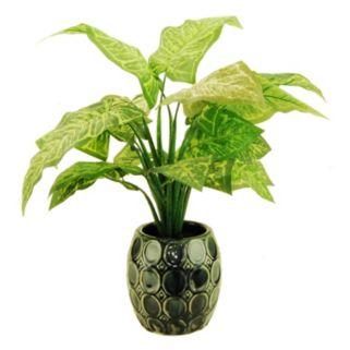 Designs by Lauren Artificial Nephtitus Plant