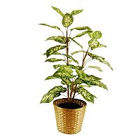 Designs by Lauren Artificial Dieffenbachia Floor Plant