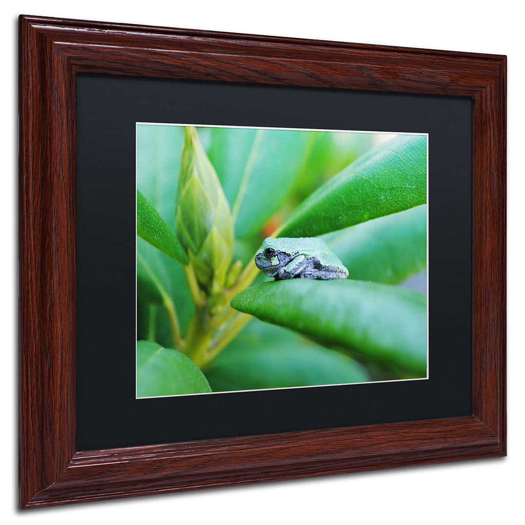 Trademark Fine Art Balance Wood Finish Framed Wall Art
