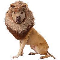 Pet Lion Dog Costume