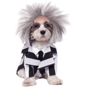 Pet Beetlejuice Costume