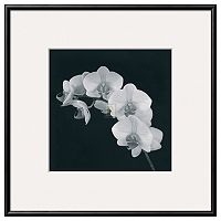 Art.com Orchid Illusion II Framed Wall Art