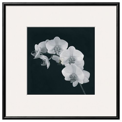 Art.com Orchid Illusion II Framed Wall Art