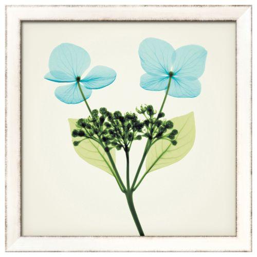 Art.com Hydrangea Stem I Framed Wall Art