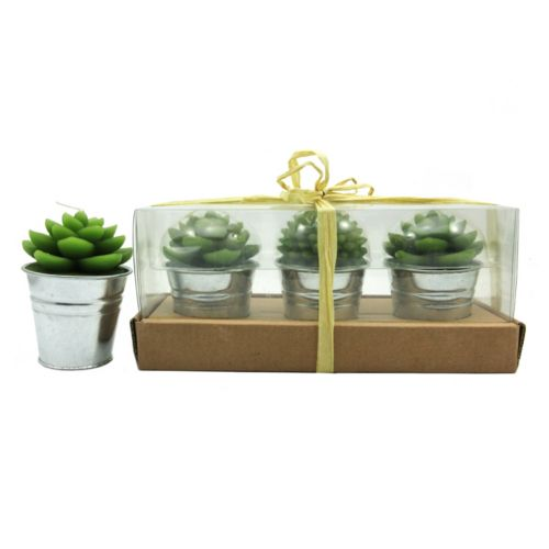 SONOMA Goods for Life™ Unscented Succulent Candle 3-piece Set