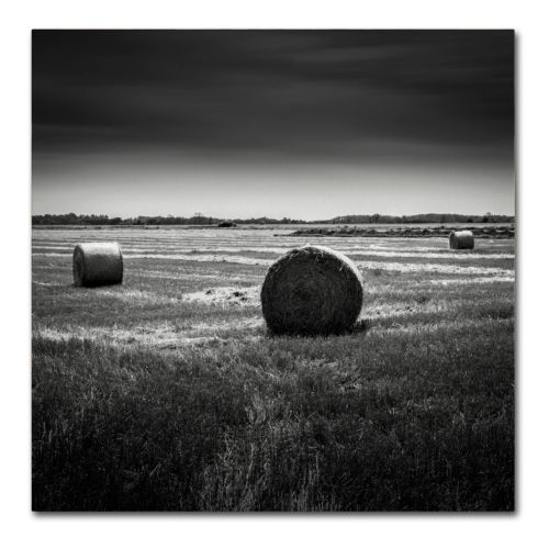 Trademark Fine Art Rural Canvas Wall Art