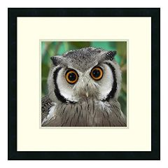 Southern White-Faced Owl Portrait Framed Wall Art