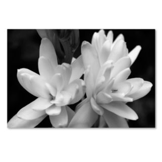 Trademark Fine Art Tuber Rose In Black And White Canvas Wall Art