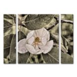 "Trademark Fine Art ""White Magnolia"" Wall Art 3-piece Set"