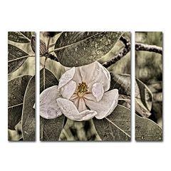 Trademark Fine Art 'White Magnolia' Wall Art 3-piece Set
